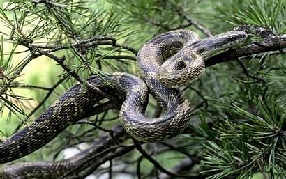 Anaconda Snake Wallpapers Desktop Superb Resolution Wallpapers13