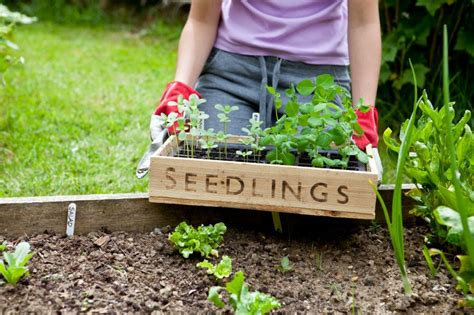 how to plant a garden planting a garden above ground garden