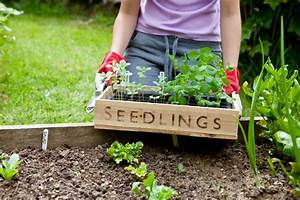 Extending your gardening seas for Plant a garden
