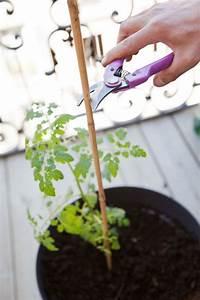 Comment Tuteurer Les Tomates : planter des tomates cerises en pot comment faire ~ Melissatoandfro.com Idées de Décoration