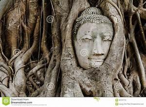 Comment Creuser Un Tronc D Arbre : t te de bouddha dans un tronc d 39 arbre photos stock image 32731173 ~ Melissatoandfro.com Idées de Décoration