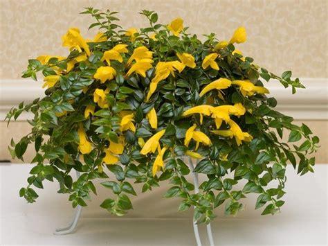 easiest indoor flowers easy flowers to grow indoors a useful guide for indoor gardening