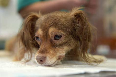 Beinerts diennakts veterinārā klīnika | Infozoo - viss ...