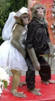 pronounce  monkey  wife animals  married