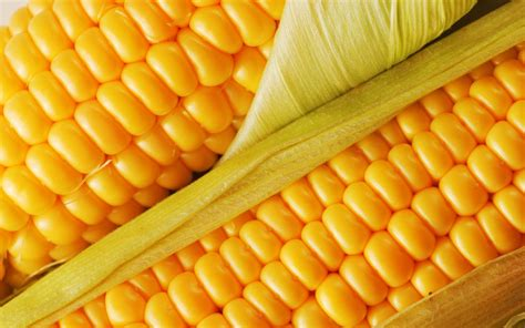 mais cuisine fresh corn desktop wallpaper