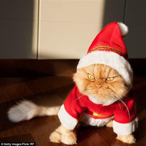 santa cat meet garfi the cat who looks permanently angry daily