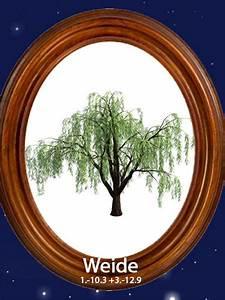 Baumhoroskop Berechnen : das gro e baum horoskopweide 1 bis 10 3 3 bis 12 9 ~ Themetempest.com Abrechnung