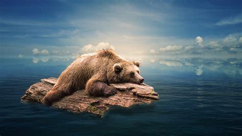 wallpaper bear floating water  animals