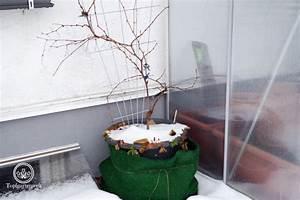 Alpenveilchen Gießen Wie Oft : wie oft muss man topfpflanzen im winter gie en ~ A.2002-acura-tl-radio.info Haus und Dekorationen