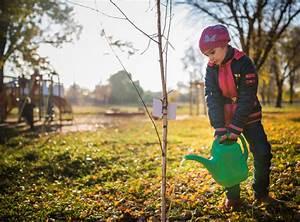 Bäume Umpflanzen Jahreszeit : b ume umpflanzen wann und wie wird 39 s gemacht ~ Orissabook.com Haus und Dekorationen