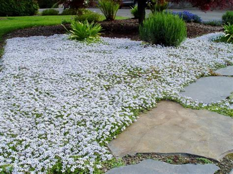 How To Choose Groundcovers And Plants To Use As Lawn