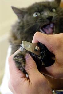 declawing a cat animal welfare groups to lobby for bill to nix n y cat