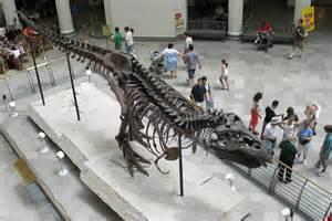 Chicago Field Museum Sue Dinosaur