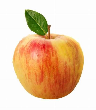 Honeycrisp Heritage Apple Apples Legacy Istockphoto Different