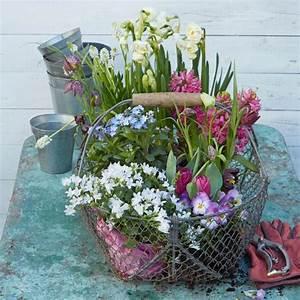 Garten im Frühling - saisonale Gartentipps - [LIVING AT HOME]