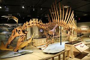 GEOL 104 Theropoda I: Dinosaurs Red in Tooth and Claw