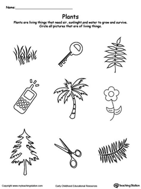 preschool plants and animals printable worksheets