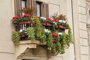 Blumen In Der Box : balkonpflanzen pflegeleichte sorten f r sonnige und schattige pl tze ~ Orissabook.com Haus und Dekorationen