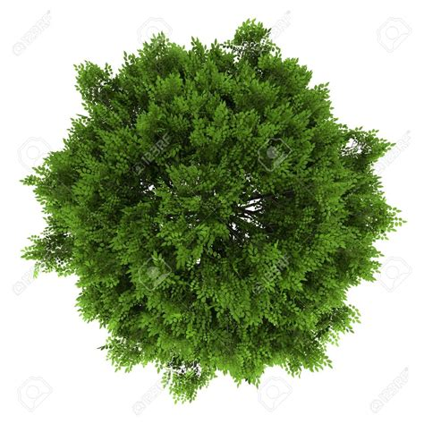 tree png top view transparent tree top view png images
