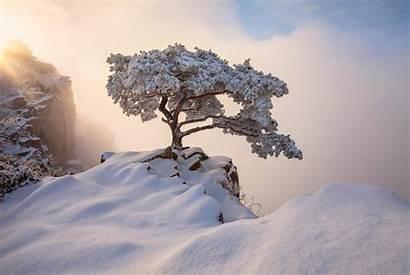 Winter Korea December South Nature Wallpapers Merry