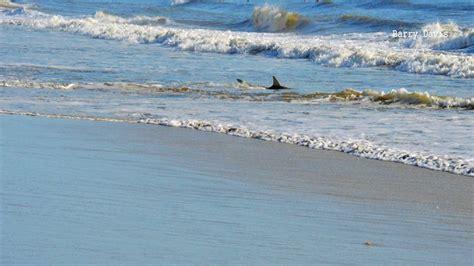 shark bites reported smyrna beach weeks