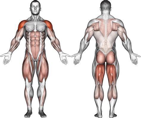 squat kettlebell swing snatch jump muscles swings deadlift clean zercher worked arm front vs side american squats body primary leg