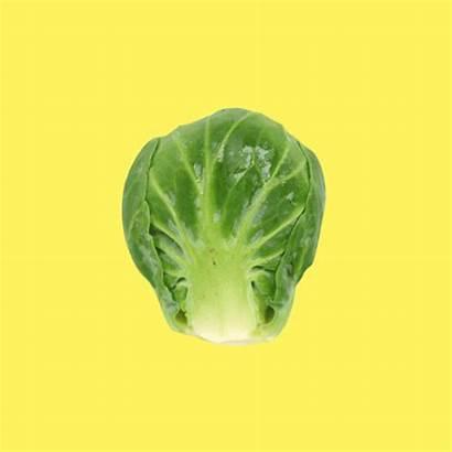 Lettuce Vegetables Celebrate Eat National Gifs Veggie