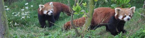 amazon world zoo park isle  wight