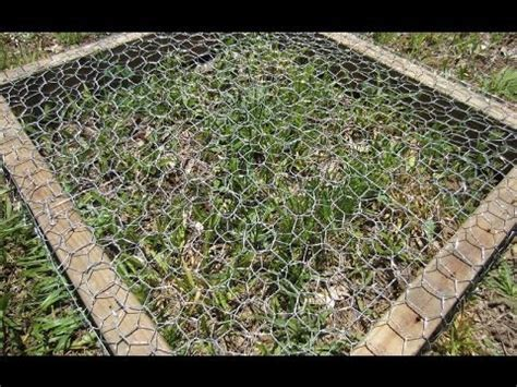 How To Grow Grass In Backyard by How To Grow Grass In A Chicken Pen