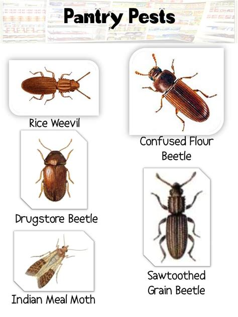 4 Tips For Preventing A Meal Moth Infestation