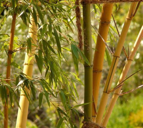 The Symbolism of the Bamboo   Archi living.com