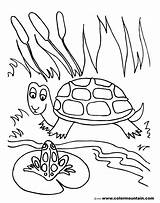 Pond Coloring Pages Frog Drawing Turtle Fish Sheet Printable Lily Pad Habitat Drawings Sea Getdrawings Animals Getcolorings Preschoolers Activity Paintingvalley sketch template