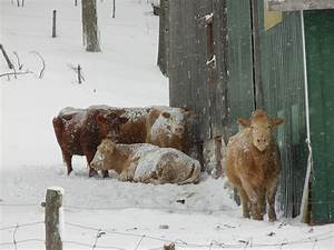 Living on a Beef Farm - Why do we do it? - Life on Manitoulin