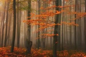 Autumn, Foggy, Forest, Stream, In, The, Mountain, Canyon, Tilt