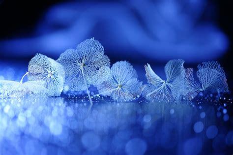 macro photography    beautiful poem  lafugue