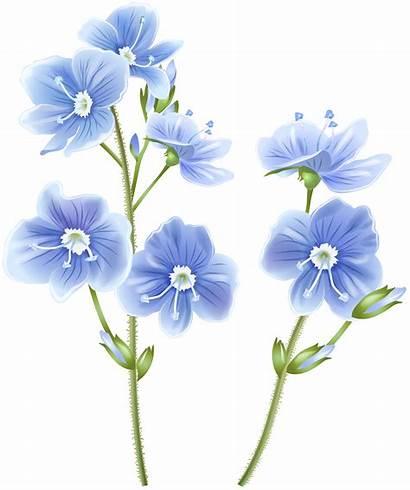 Transparent Flower Clipart Wildflower Wild Clip Flowers
