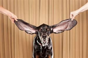 Guinness World Records 2012 - funnywebpark