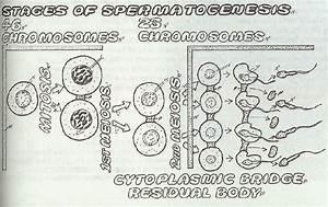 30 Biology Coloring Book Pdf