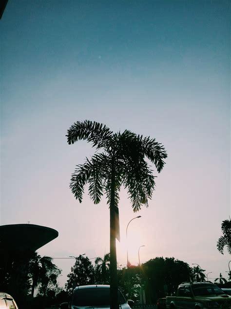 stock photo  palmtree vsco