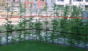 Reben Richtig Schneiden : junge obstb ume schneiden jungen apfelbaum schneiden wann ~ Lizthompson.info Haus und Dekorationen