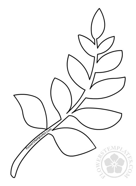 leafy branch template coloring flowers templates