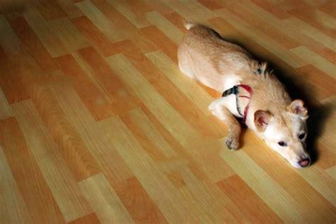 hardwood floor  dogs pets