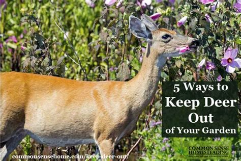 how to keep deer out of your garden keep deer out of your garden 5 deer deterrent strategies