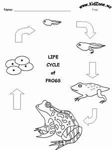 Life Cycle Of A Frog Drawing at GetDrawings | Free download