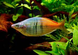 The 75 most colourful fish — Practical Fishkeeping Magazine