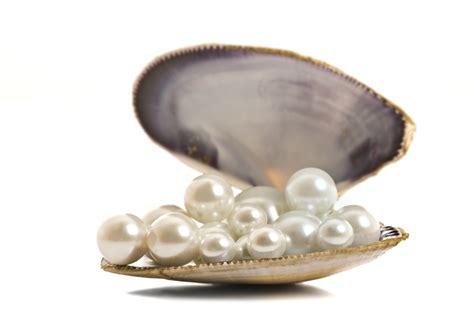 le berger l perle la poudre de perle peu connue mais incontournable en