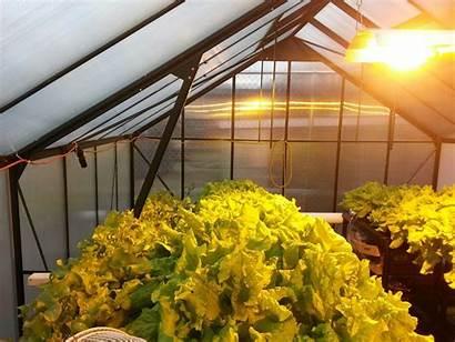Hydroponic Grow Indoor Garden Lights Gardening Hydroponics
