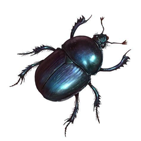 Beetle - Official Pathologic Wiki
