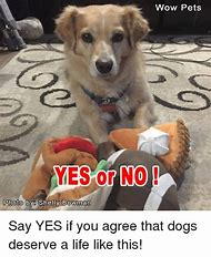 Dog Saying Yes Meme