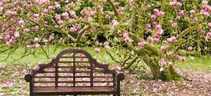 A Dozen Of The Easiest Flowering Trees To Grow